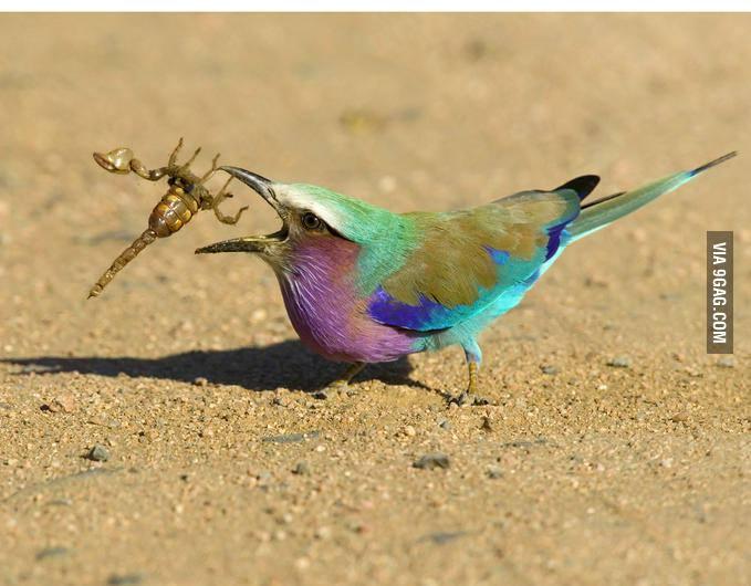 پرنده عقرب خوار!